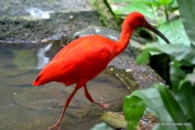 Red colored flamingo