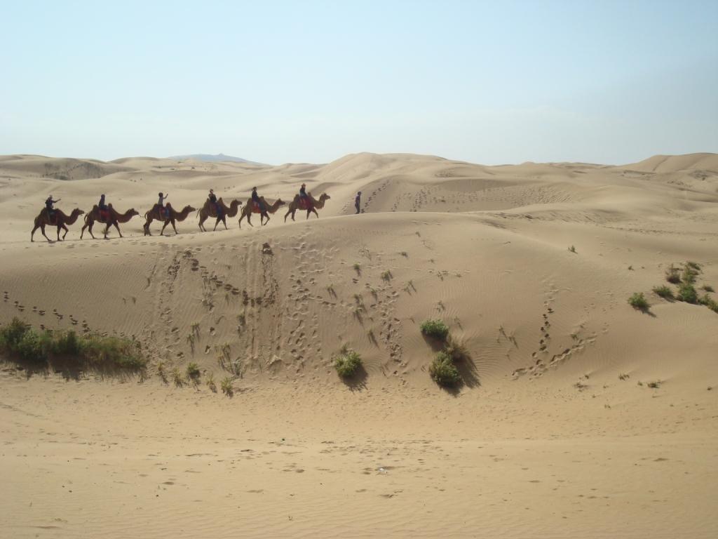 Ordos Desert My Life