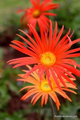 Lovely flowers..