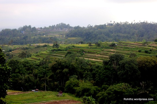 Pacung Rice terraces..A view from the restaurant.