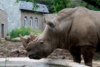 Rhino at CC Zoo