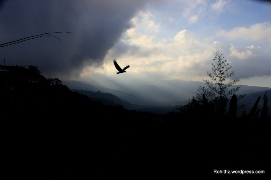 A traveller without observation is a bird without wings.- Moslih Eddin Saadi.