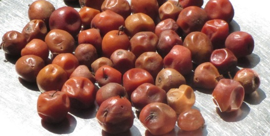 Regi pandulu( Indian Jujube fruit)