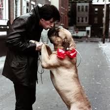 Stallone dog