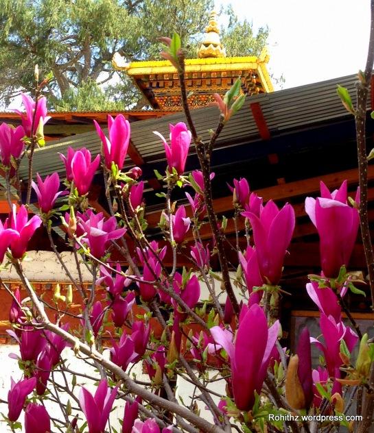 Bhutan Flowers (16)