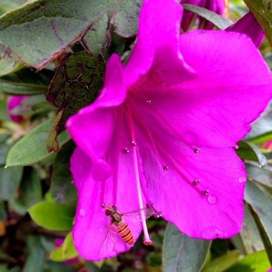 Gangtok flower exhibition (1)