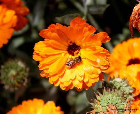 Gangtok flower exhibition (12)