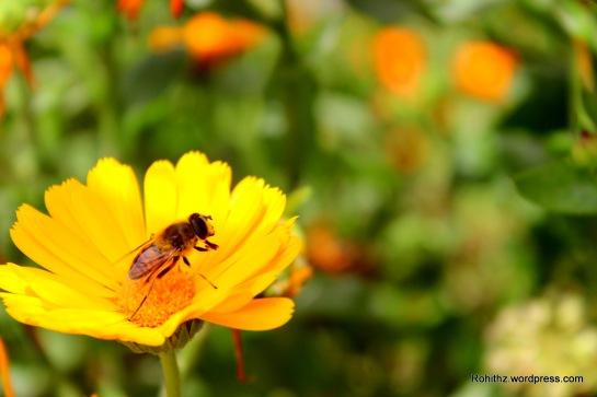 Gangtok flower exhibition (13)