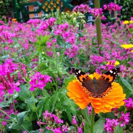 Gangtok flower exhibition (5)