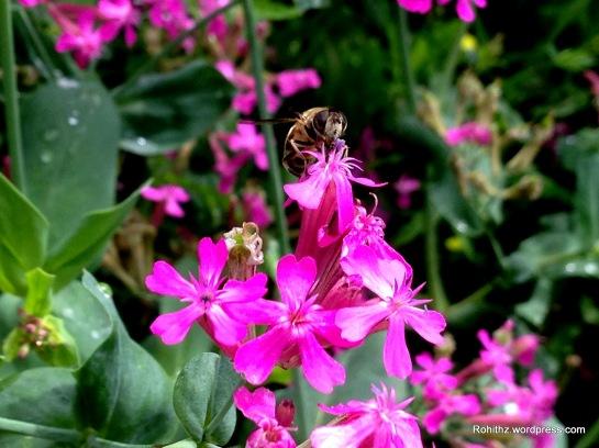 Gangtok flower exhibition (9)