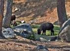 Thimphu zoo. (2)