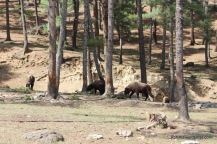 Thimphu zoo. (7)