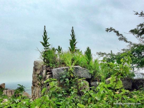Khilla ghanpur (59)