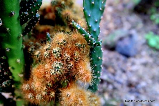 The Kaziranga Orchid and Biodiversity Park (9)